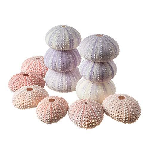 Top 10 Urchin Shells of 2021