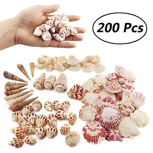 Top 10 Weoxpr 200pcs Sea Shells Mixed Ocean Beach Seashells of 2021