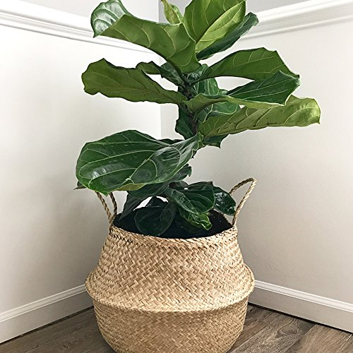Top 10 Woven Plant Basket of 2021