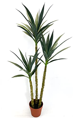 Top 10 Yucca Plant of 2021